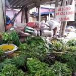 Thị trường - Tiêu dùng - Cây dại ở quê lên phố thành thuốc trị bệnh