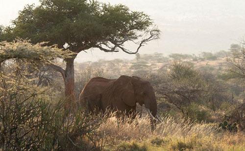 Ngủ dưới trời sao ở Kenya - 8