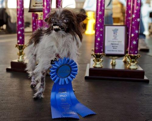 Ngắm chú chó xấu nhất thế giới năm 2014 - 1