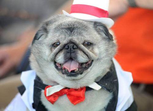 Ngắm chú chó xấu nhất thế giới năm 2014 - 5