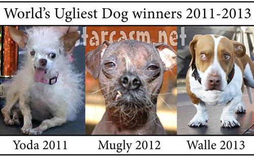 Ngắm chú chó xấu nhất thế giới năm 2014 - 7