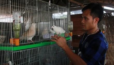 Nghề dạy chim hót đút túi tiền tỷ ở Hà Nội - 1