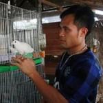 Bạn trẻ - Cuộc sống - Nghề dạy chim hót đút túi tiền tỷ ở Hà Nội