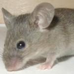 Sức khỏe đời sống - Đang ngủ, trẻ 15 tháng bị chuột cắn sưng bàn tay