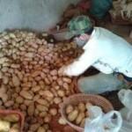 Thị trường - Tiêu dùng - Tiểu thương kể chuyện biến khoai tây TQ thành Đà Lạt