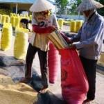 Thị trường - Tiêu dùng - Đưa hàng Việt sang châu Phi