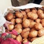 Thị trường - Tiêu dùng - Phân biệt khoai tây Đà Lạt với khoai Trung Quốc