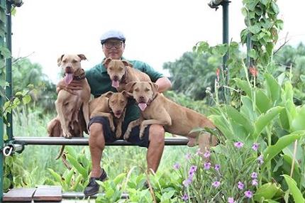 Rộ mốt nuôi chó Pit Bull: Hiểm nguy rình rập - 4
