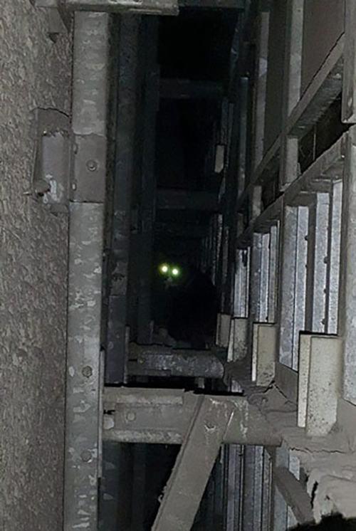 Giải cứu chú mèo bị mắc kẹt 5 năm trong vách tường - 3
