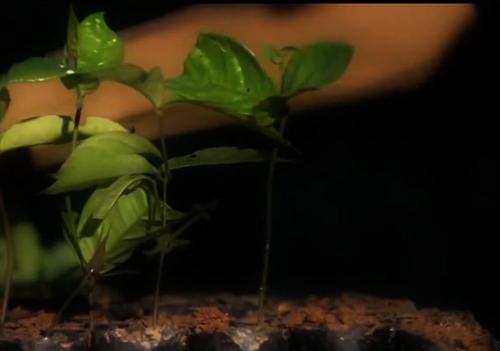 8X thu nhập nửa tỷ/năm từ cây quý - 2