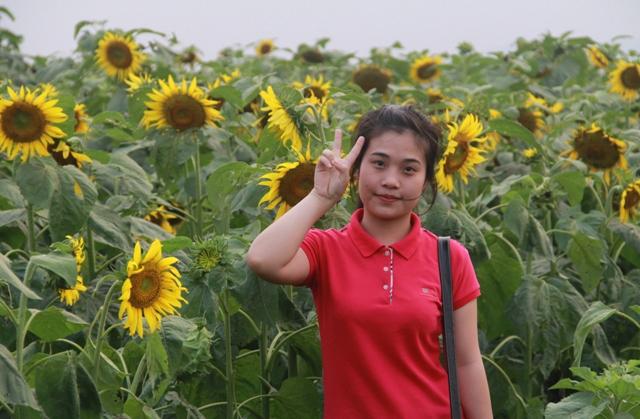 """Ngắm thảm vàng """"hoa mặt trời"""" nơi miền Tây xứ Nghệ - 7"""