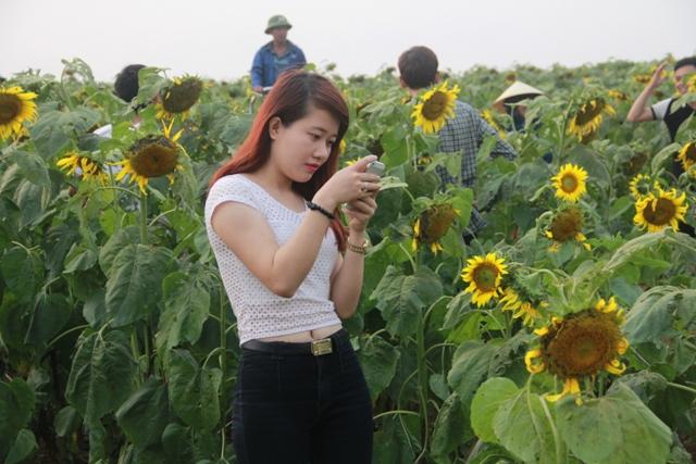 """Ngắm thảm vàng """"hoa mặt trời"""" nơi miền Tây xứ Nghệ - 5"""