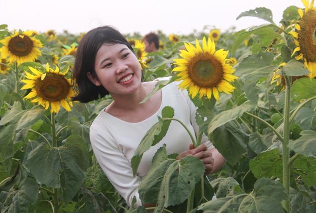 """Ngắm thảm vàng """"hoa mặt trời"""" nơi miền Tây xứ Nghệ - 3"""