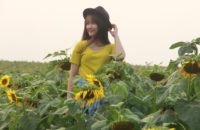 """Ngắm thảm vàng """"hoa mặt trời"""" nơi miền Tây xứ Nghệ - 8"""
