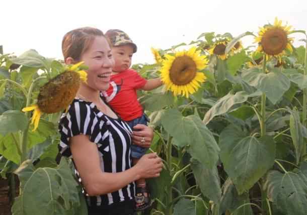 """Ngắm thảm vàng """"hoa mặt trời"""" nơi miền Tây xứ Nghệ - 9"""