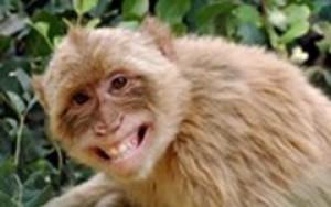 Trẻ bốn tuổi suýt mù loà do khỉ cắn gây nhiễm trùng