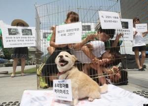 """Những chiến dịch """"nói không với thịt chó"""" của """"sao"""" châu Á"""