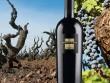 Thưởng thức rượu vang Ý thượng hạng San Marzano