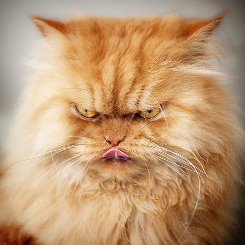 """Vẻ đẹp """"kinh hoàng"""" của con mèo giận dữ nhất thế giới - 1"""