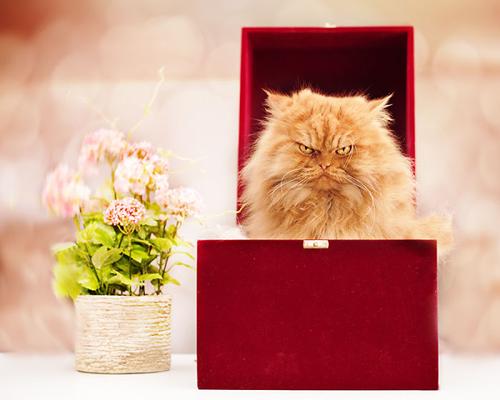 """Vẻ đẹp """"kinh hoàng"""" của con mèo giận dữ nhất thế giới - 2"""