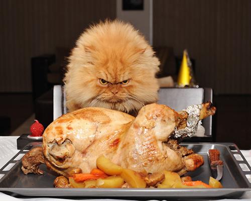 """Vẻ đẹp """"kinh hoàng"""" của con mèo giận dữ nhất thế giới - 8"""