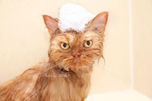"""Vẻ đẹp """"kinh hoàng"""" của con mèo giận dữ nhất thế giới - 7"""