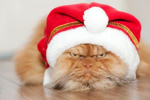 """Vẻ đẹp """"kinh hoàng"""" của con mèo giận dữ nhất thế giới - 4"""
