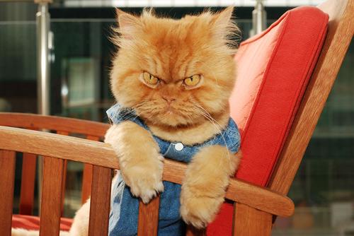 """Vẻ đẹp """"kinh hoàng"""" của con mèo giận dữ nhất thế giới - 6"""