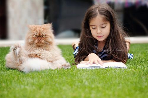 """Vẻ đẹp """"kinh hoàng"""" của con mèo giận dữ nhất thế giới - 5"""