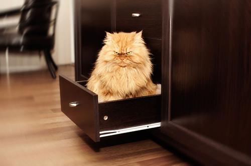 """Vẻ đẹp """"kinh hoàng"""" của con mèo giận dữ nhất thế giới - 9"""