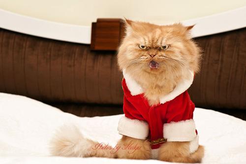 """Vẻ đẹp """"kinh hoàng"""" của con mèo giận dữ nhất thế giới - 10"""