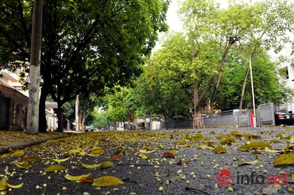 Hà Nội đẹp dịu dàng mùa lá rụng - 2