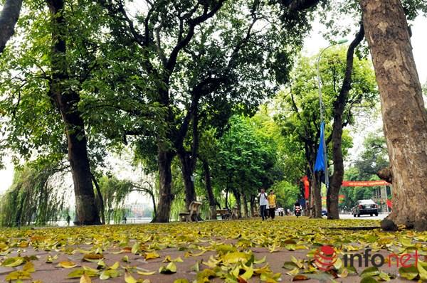 Hà Nội đẹp dịu dàng mùa lá rụng - 5