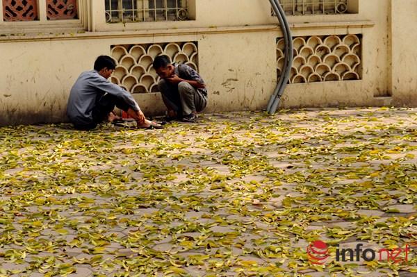Hà Nội đẹp dịu dàng mùa lá rụng - 6