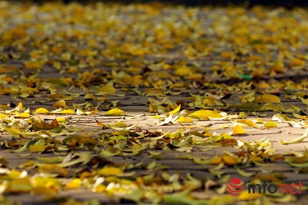 Hà Nội đẹp dịu dàng mùa lá rụng - 1