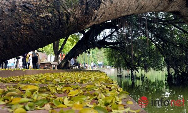 Hà Nội đẹp dịu dàng mùa lá rụng - 4