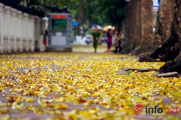 Hà Nội đẹp dịu dàng mùa lá rụng - 11