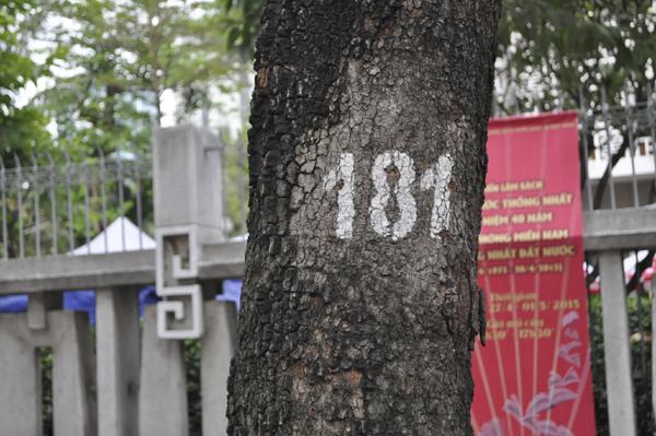 Ảnh: Sài Gòn mộng mơ với những con đường lá me bay - 6