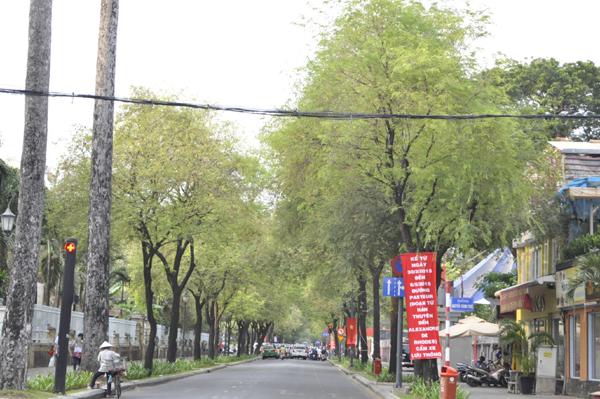 Ảnh: Sài Gòn mộng mơ với những con đường lá me bay - 3