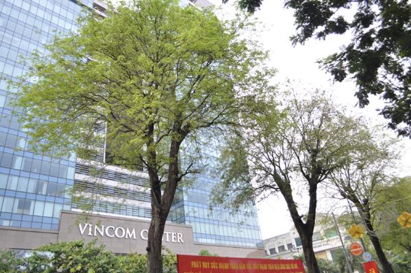 Ảnh: Sài Gòn mộng mơ với những con đường lá me bay - 9