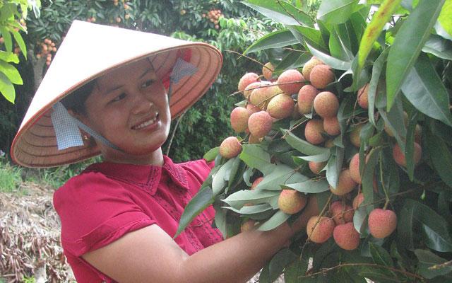 Mỹ - thị trường lớn cho nông sản Việt - 1