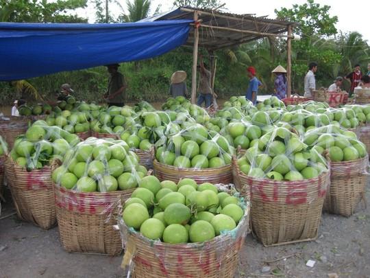 Giá trái cây giảm thê thảm - 1