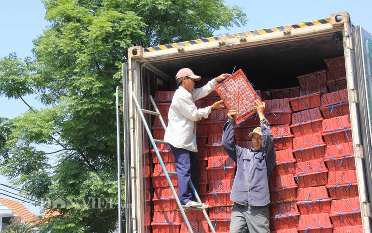Được mùa, ớt tươi xuất bán tính bằng... container - 7