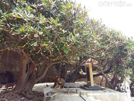 Ngôi chùa ẩn mình trong hang núi lửa ở đảo Lý Sơn - 6