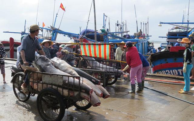 Ngư dân câu cá ngừ chuyển hướng làm ăn - 1