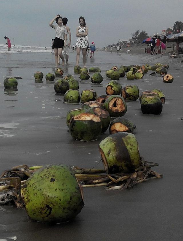 """Sau kỳ nghỉ lễ, vỏ dừa dập dềnh """"bơi"""" trên bãi biển - 2"""