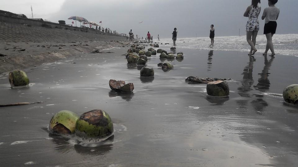 """Sau kỳ nghỉ lễ, vỏ dừa dập dềnh """"bơi"""" trên bãi biển - 1"""