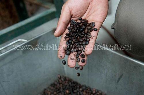 Nhà cung cấp và phân phối cà phê sạch uy tín - Nguyen Chat Coffee - 7