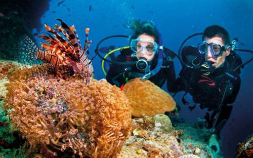 Ngắm san hô và đáy biển kỳ thú ở Cù Lao Chàm - 2