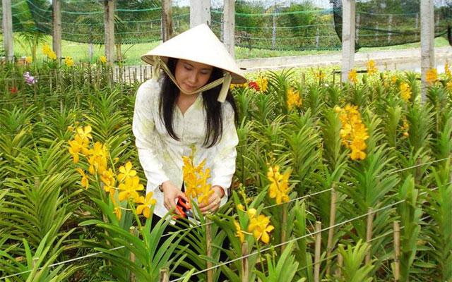 Loay hoay tìm giống tốt cho hoa lan - 1